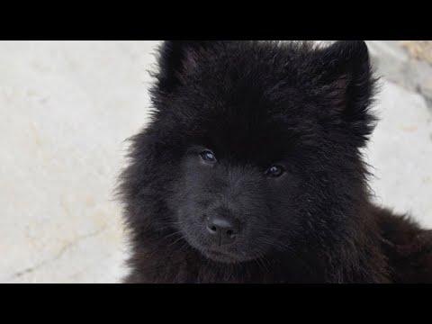 Famiglia Adotta un Cane, Ma Quando ll Veterinario lo Vede, Chiama Subito la Polizia