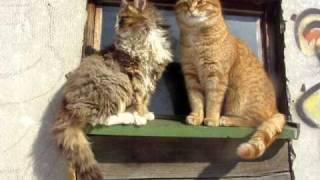 Людвиг и Лап Лапыч.Сидят кошки на окошке.