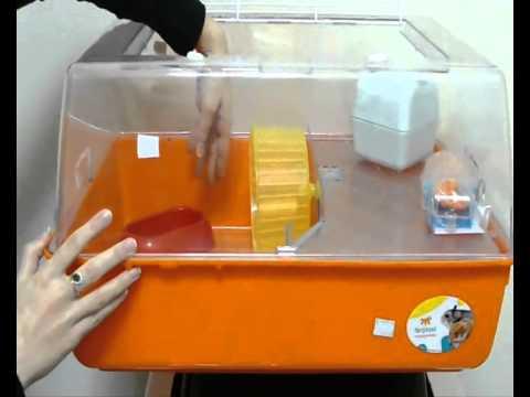 Чистка клетки у морской свинки)_ - YouTube