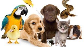 ❤ Домашние животные для детей. На ферме. Кто как называется?