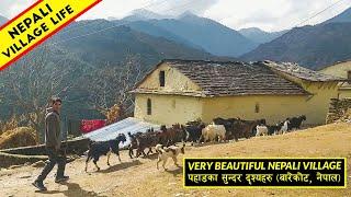 Very Beautiful Village Life in Midwest Nepal   Barekot, Jajarkot   IamSuman