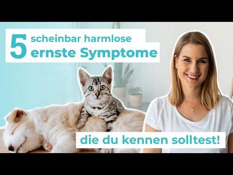 5 Unterschätzte Symptome Bei Hunden & Katzen, Die Du NICHT Ignorieren Solltest!
