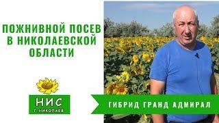 Пожнивной посев в Николаевской области от Научного института селекции г Николаев НИС