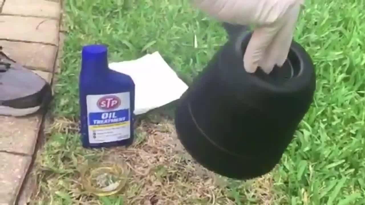 DIY getting rid of yellow flies