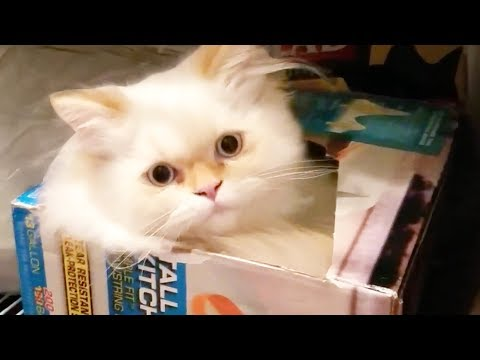 THESE CATS WILL MAKE YOU SMILE
