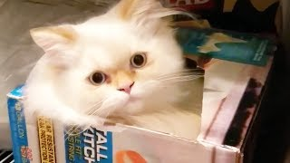 THESE CATS WILL MAKE YOU SMILE 🐱