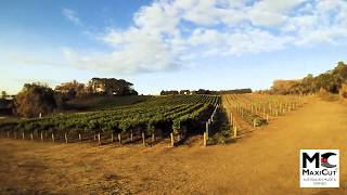VINEYARD REJUVENATION WITH MAXICUT - BUSH FIRE RECOVERY