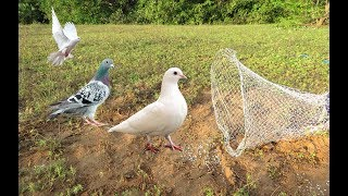 Awesome Quick Bird Trap Using Net Bird Trap And Plastic Bottle - How To Make Net Bird Trap Work 100%