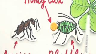 Symbiose Definition Mutualismus Allianz Mit Video 10