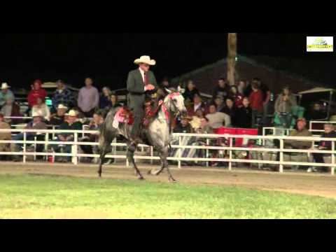 Missouri Fox Trotter Open 5+ & Older WGC Ava 2014