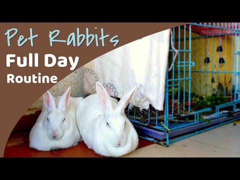 Daily Rabbit Routine | Having Pet Rabbit in India vlog 4