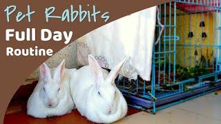 Daily Rabbit Routine   Having Pet Rabbit in India vlog 4