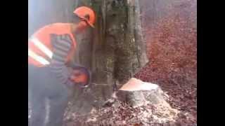 Najlepsza kompania w lesie(Drwal)