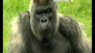 """""""Park zwierząt"""" w Viasat Nature"""