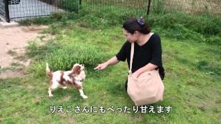 2014年6月21日(土) 加東市 社SA ドッグラン アンジーがやっ...