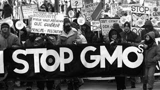 Who Protects us From GMO