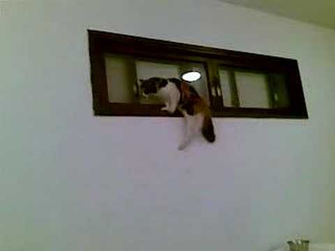 Stupid cat in panic