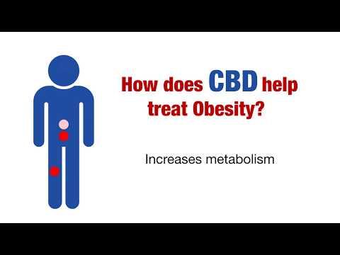 CBD In the Treatment of Obesity - CBD Wellness Guide