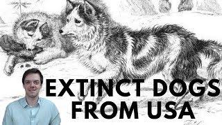 Extinct Dogs from USA - Salish Wool Dog - Hare Indian Dog - Hawaiian Poi Dog