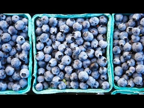 Can What You Eat Help Prevent Alzheimer's Disease?