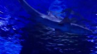 Турция. Анталия. Океанариум. Antalya Aquarium