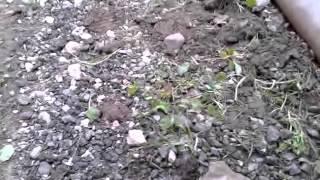 Самое короткое видео