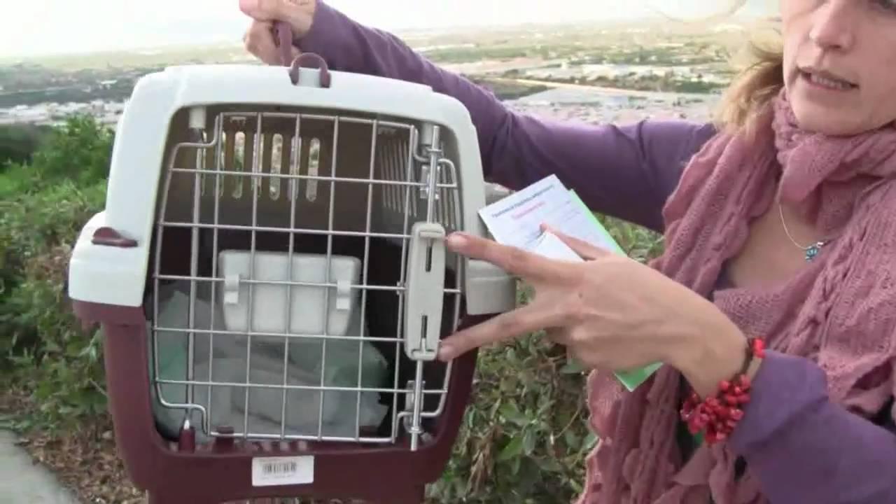 Что нужно чтобы перевезти кота самолетом