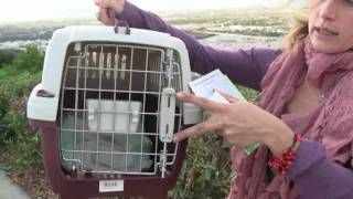 вывоз животного (кота) за границу (в Испанию) прививки