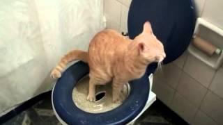 Кошка ходит в туалет на унитаз. Система