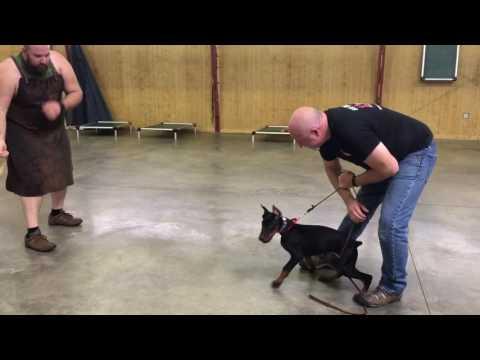 Powerhouse Puppy Protection Training 'Edge' 14 1/2 Wks Early Development BAB Participant