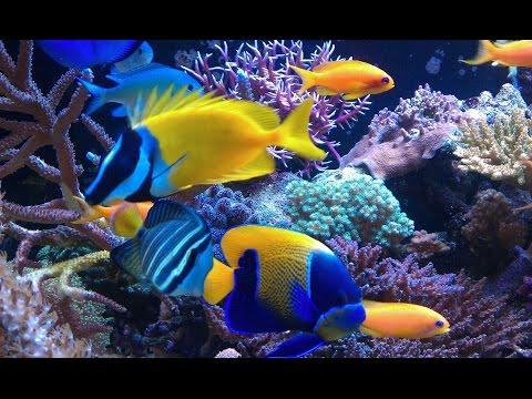 Aquarium | Guides do simple aquariums | easy to raise ornamental fish