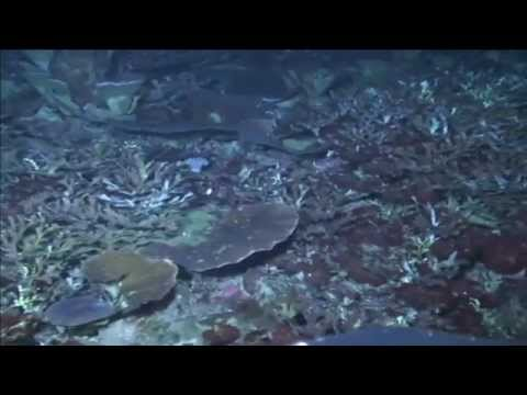 ROV Test Dive - Falkor