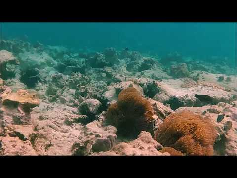 Zanzibar 2016 -Mnemba Island Snorkeling- GoPro