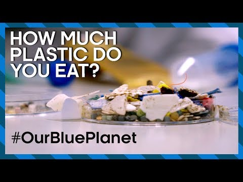 How Much Plastic Do You Eat? #OurBluePlanet | Earth Lab