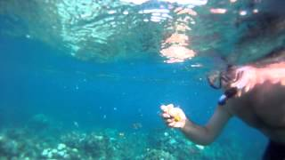Eden Rock Snorkeling 1   Grand Cayman