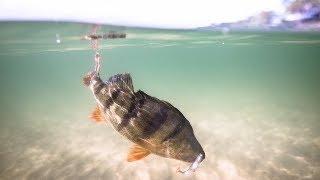Рыбалка на Окуня Поздней Осенью в Лесной Старице. Ловля Окуня и Щуки на Микроджиг