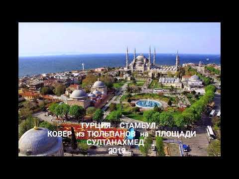 Прогулки по Стамбулу. Ковер из тюльпанов на площади Султанахмет -2019. Tulip Carpet In Sultanahmet