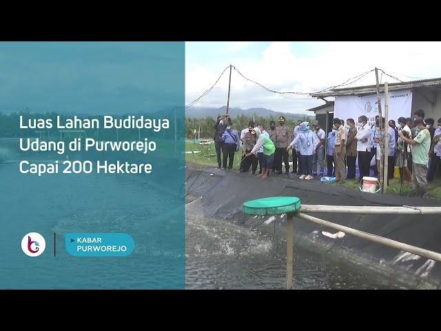 Luas Lahan Budidaya Udang di Purworejo Capai 200 Hektare