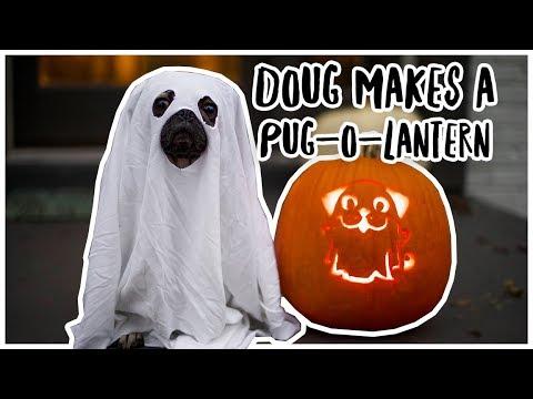 Doug Makes a PugOLantern  Doug The Pug