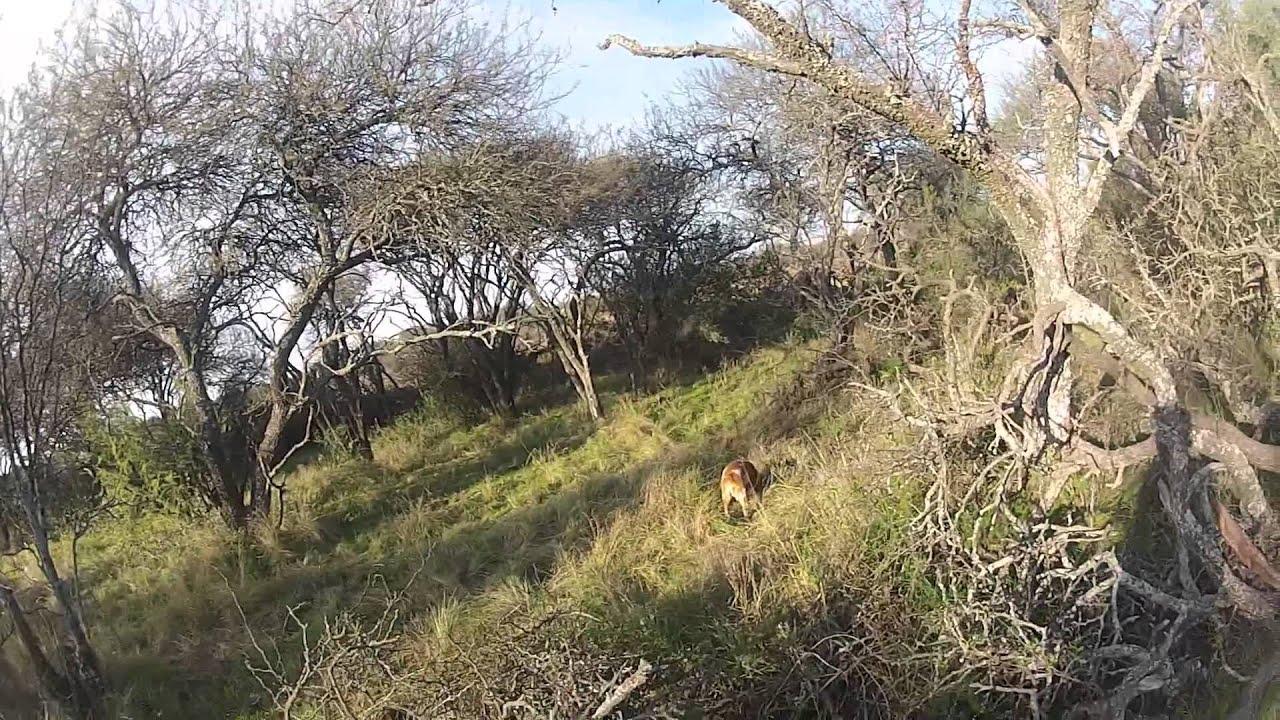 Gopro Hero 5 Vs Hero 4 >> Cacería de perdices en el Monte Pampeano - La Pampa - ARGENTINA - YouTube