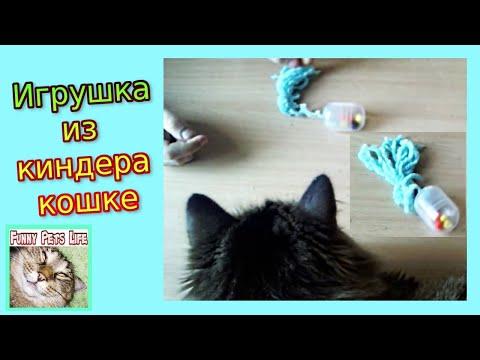 Кот из киндера своими руками