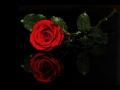Miniature de la vidéo de la chanson Ils S'aiment