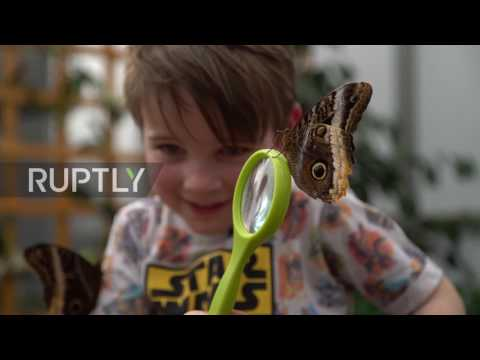 UK: Hundreds of tropical butterflies released in Natural History Museum