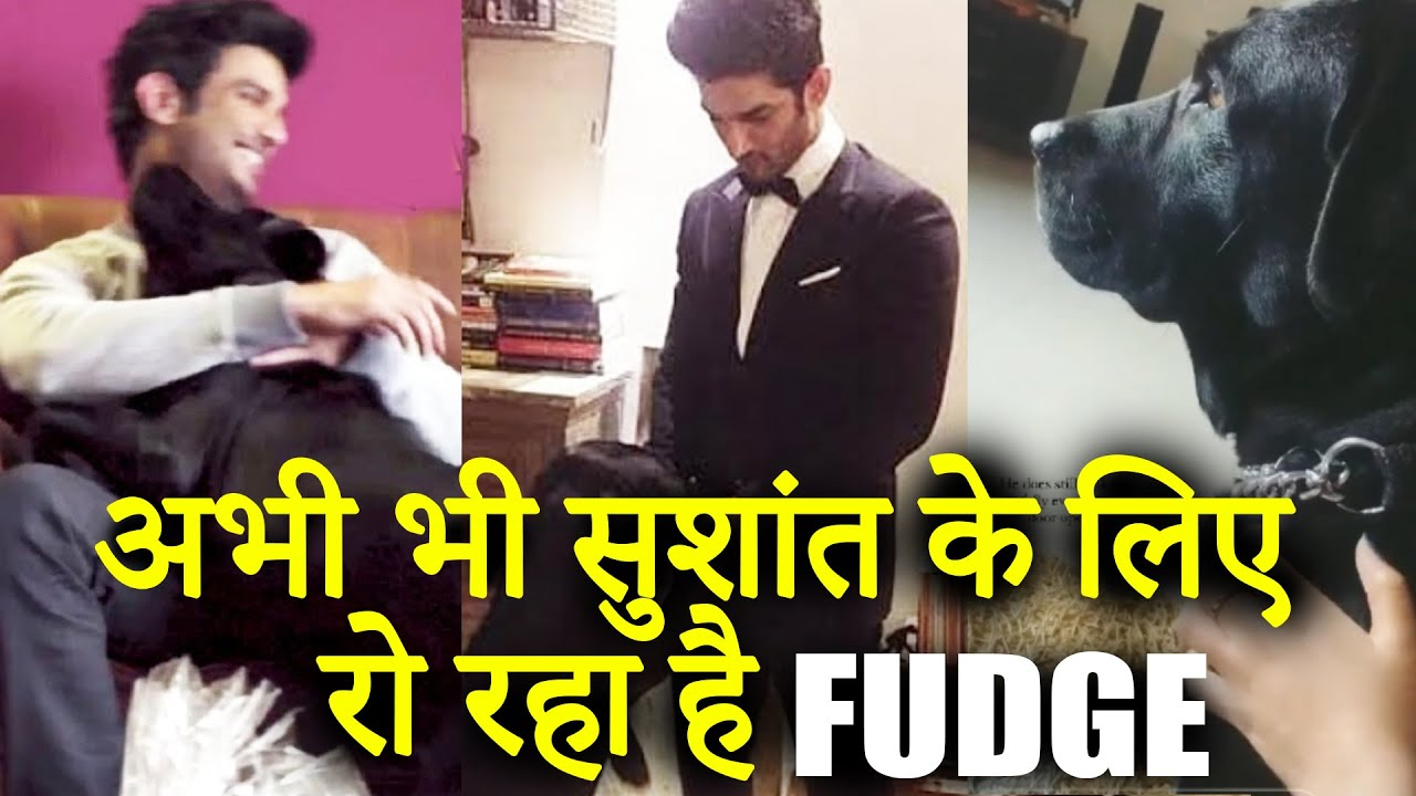 Sushant Singh Rajput Dog Fudge Still Wait For Sushant