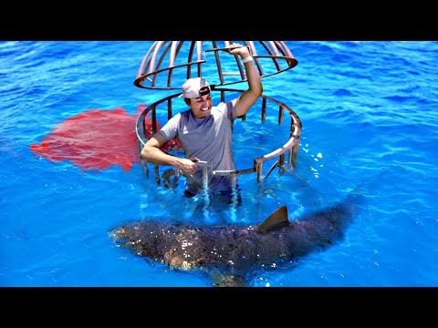 Shark Attack Test-