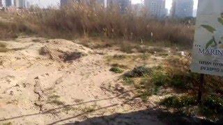 Ашдод - Кот против Лисы в центре Ашдода