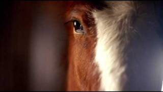 budweiser clydesdale commercial 2006 super bowl