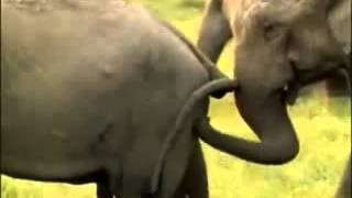 Funny Animal Mating