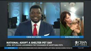 Adopting Amid The Coronavirus: National Adopt A Shelter Pet Day
