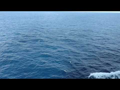 Waters in The Gulf Of Mexico. Western Caribbean Cruise 2016